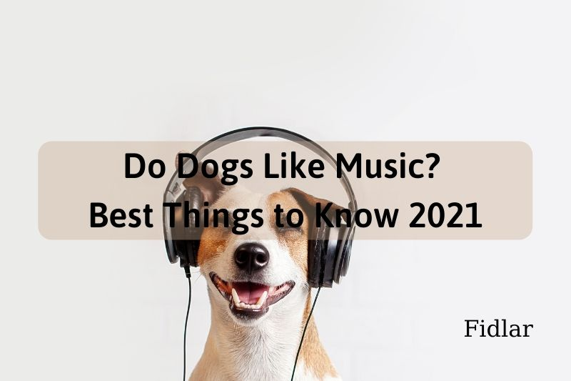 Do Dogs Like Music Best Things to Know 2021