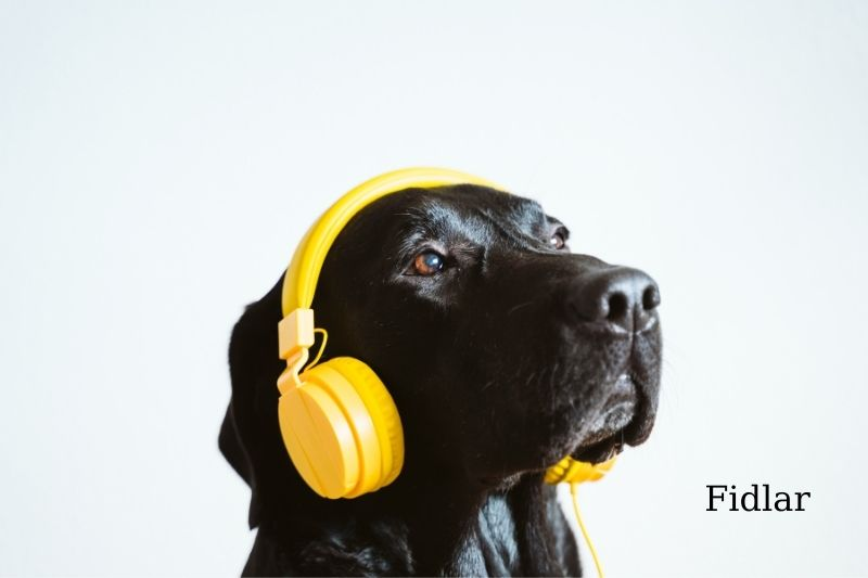 Dogs who Knew their Tunes