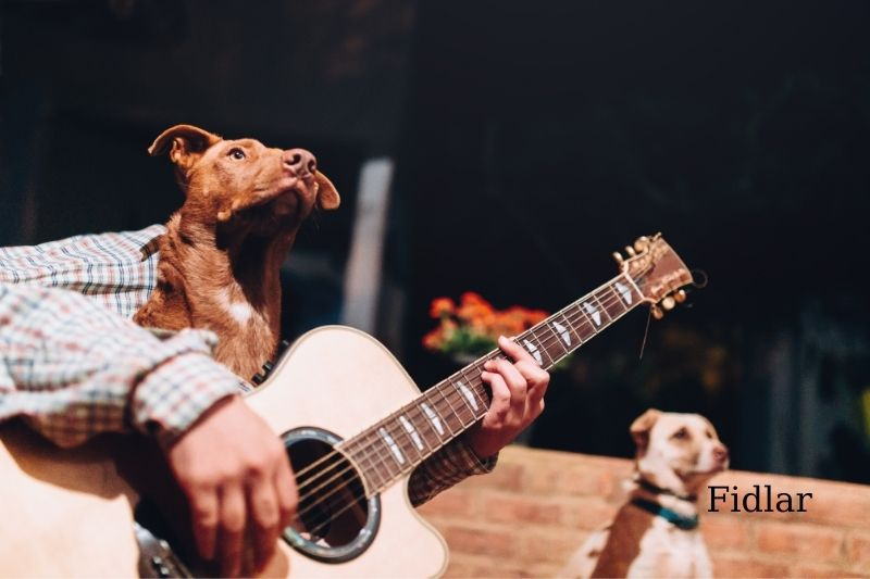 Music and Dog anxiety