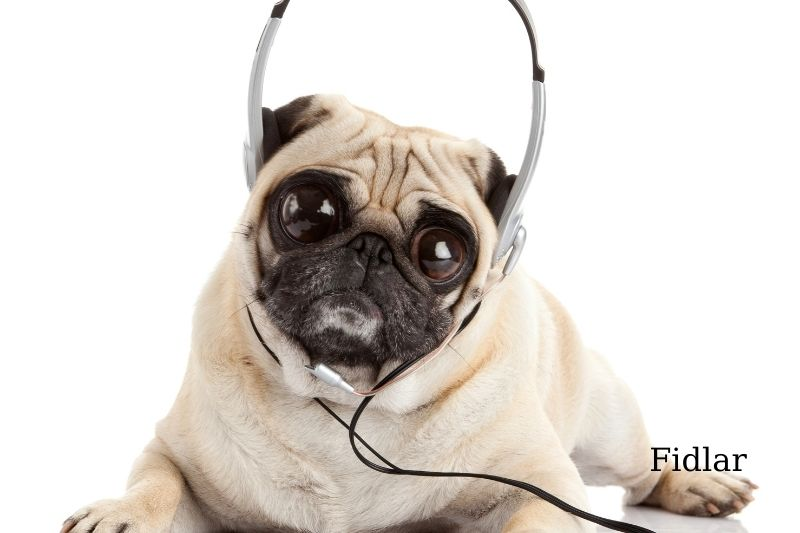 Music helps shelter dogs