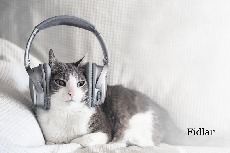 Cats Respond to Familiar Sounds