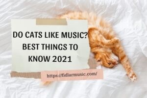 DO CATS LIKE MUSIC BEST THINGS TO KNOW 2021