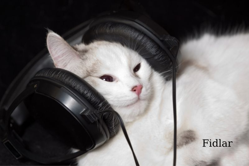 What kind of music do cats like