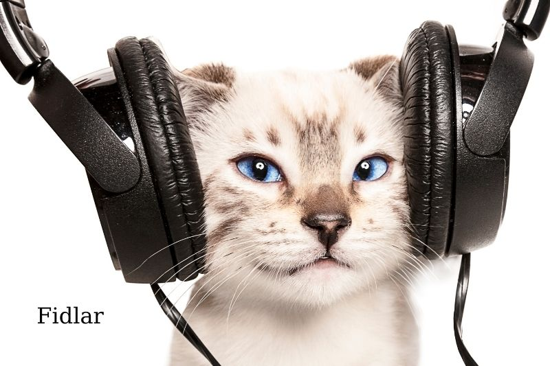 Why Do Cats Like Music